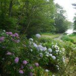 広島の三景園は紫陽花(あじさい)が素晴らしい!花まつり2018年6月9日~7月1日